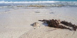 beach-4717768_640