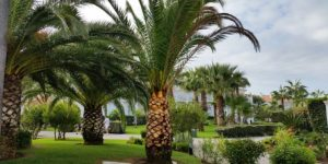 palm-trees-2865223_640